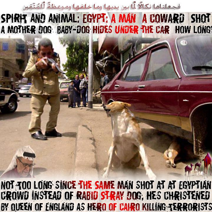 SPIRIT-AND-ANIMAL